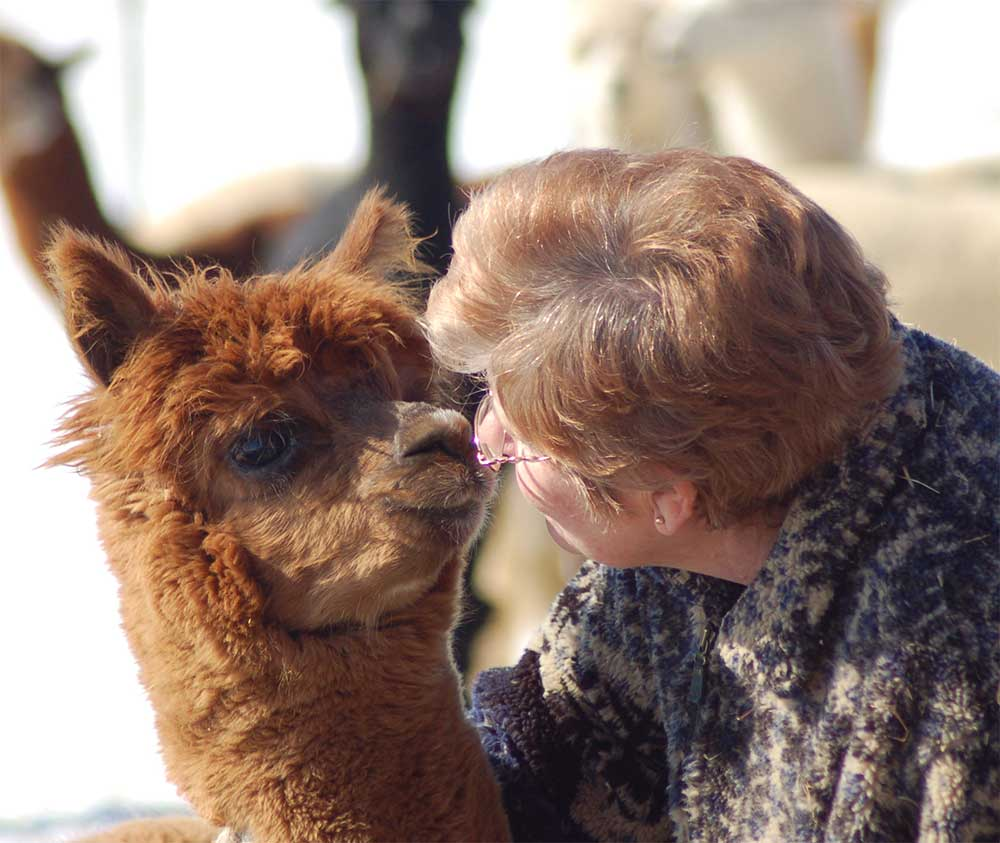 Elaine with a baby alpaca